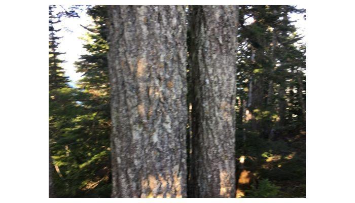 Go Hiking and Hug A Tree